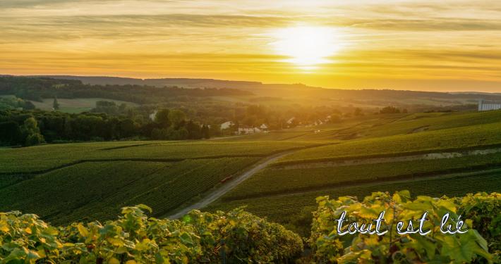 Témoignage du référent à l'écologie intégrale du diocèse de Reims