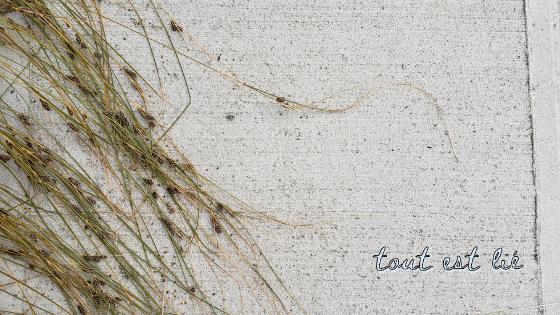 De terre et de béton : paraboles de Jésus relatives à la culture de la terre