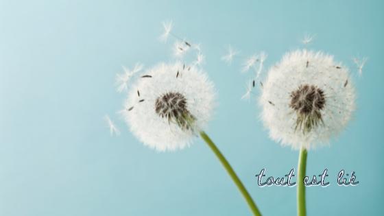 Pollen d'Église verte : l'outil des adolescents engagés pour l'environnement